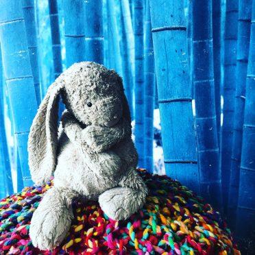 Bunny Week